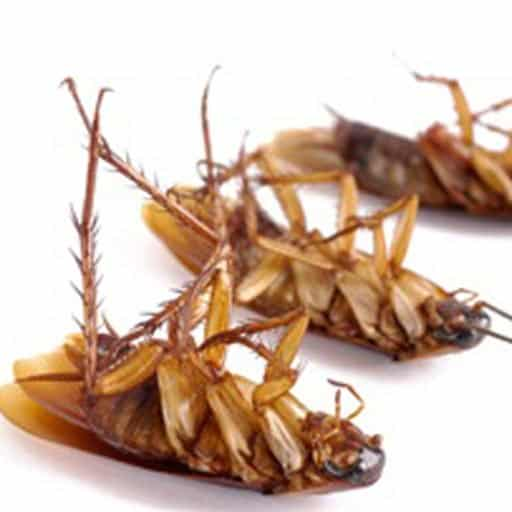 cockroach removal Vancouver