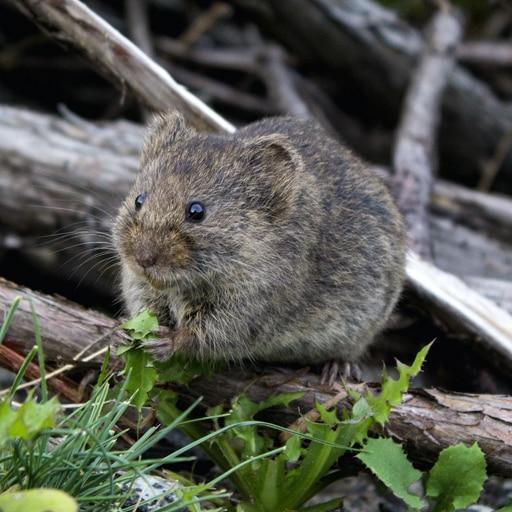 Mice Control Vancouver