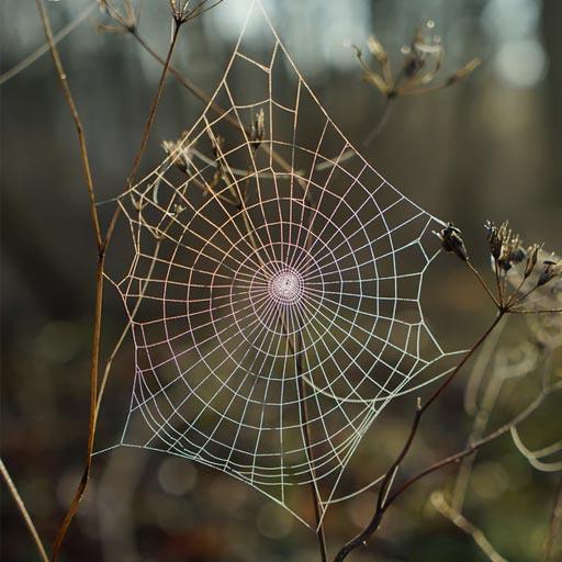 spider control Vancouver
