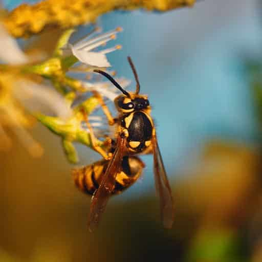 Wasp Control Vancouver