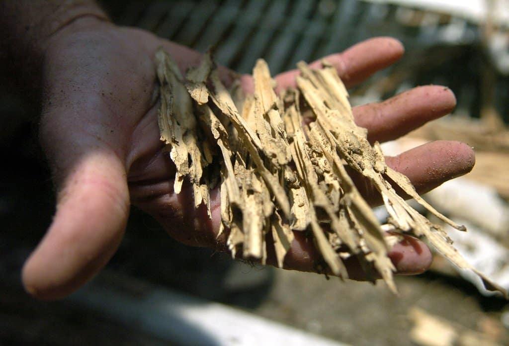 Avoiding termite infestation in Vancouver