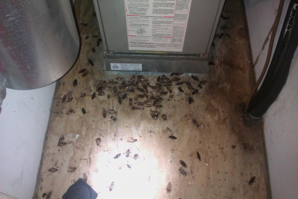 Basements and the bugs they can be home to