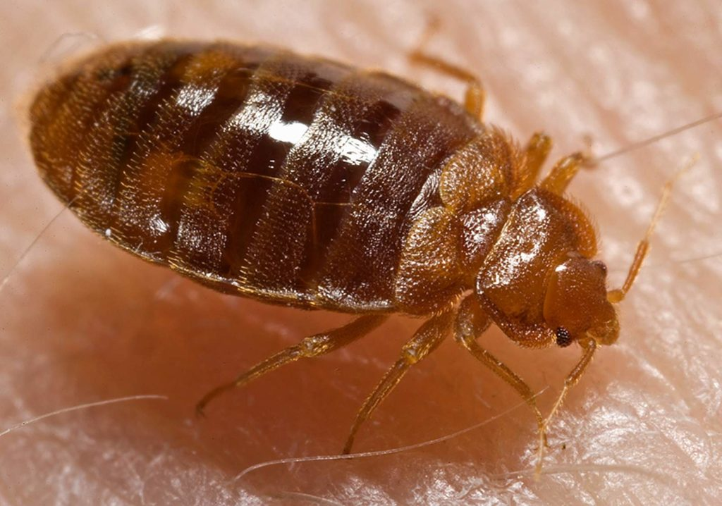 5 Signs that you may have bed bugs