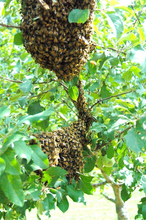 Effective Bee Control Methods Vancouver