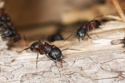Seasonal Pests to Look Out for Throughout the Year
