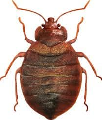Cons Bed Bug Heat Treatment Vancouver