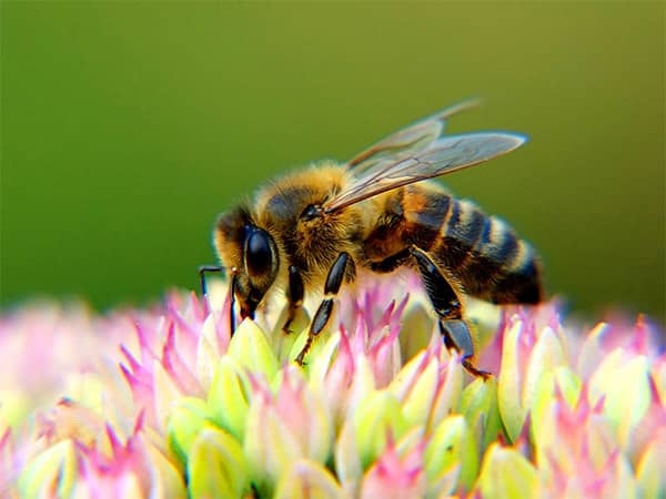 How to detect bee's in Vancouver