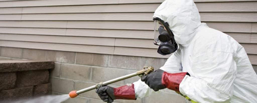 DIY Pest Control vs. Professional Extermination