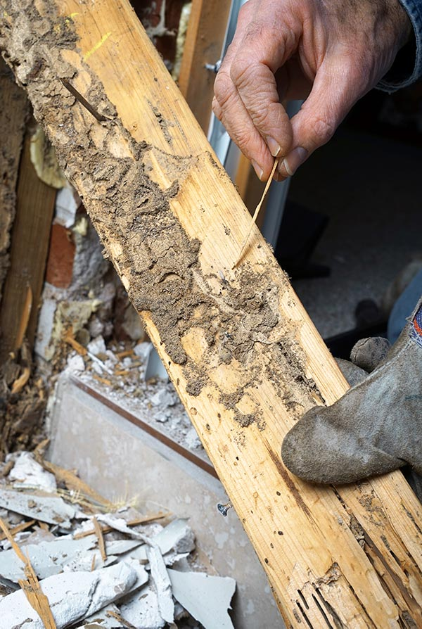 Tools to detect termites in Vancouver