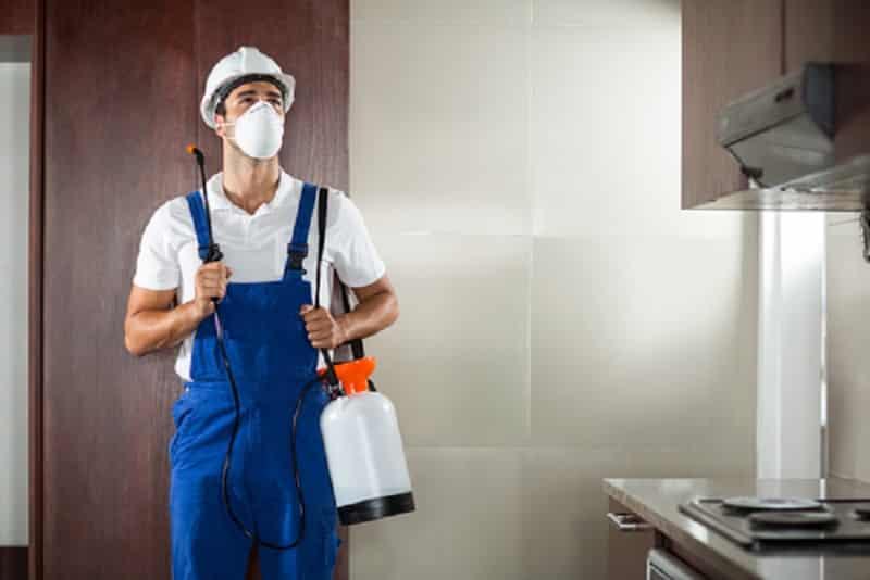 DIY Pest Control Methods vs. Pest Control Service