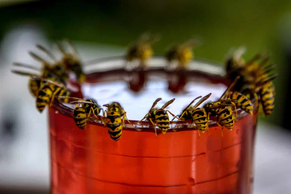 Wasps That Need Removal