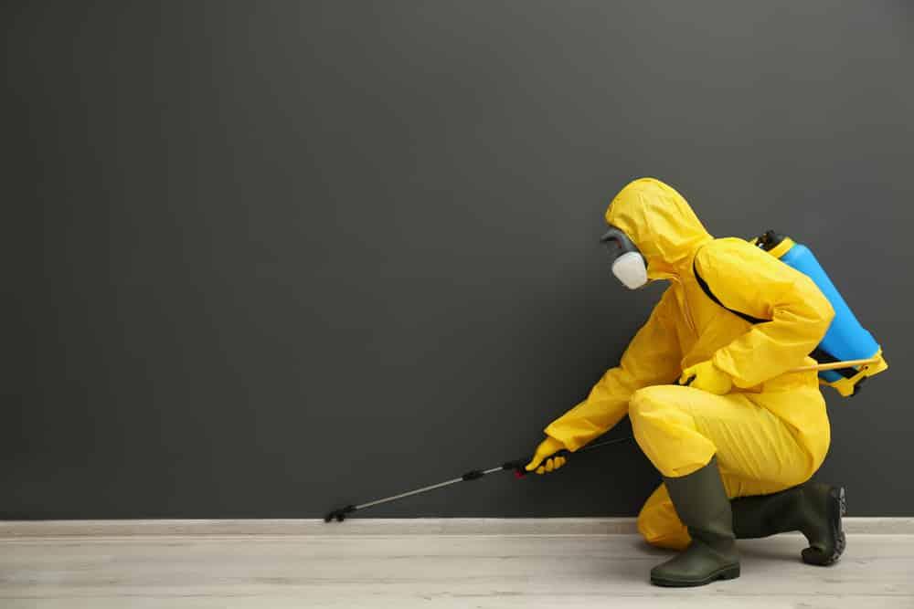 Homemade Pesticide